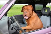 На дълго пътуване с кучето