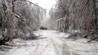 """Продължава разчистването на прохода """"Петрохан"""" от падналите и пречупени дървета"""