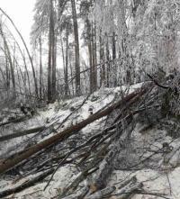 """Проходът """"Петрохан"""" остава затворен. Продължава разчистването на падналите дървета"""